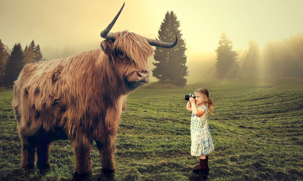 Girl taking Photo of Bull